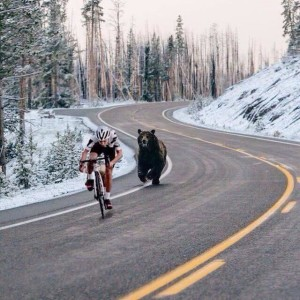 bikers vs grizzly